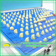 EN-G14 Factory Directly Shipping Teeth Preparation Model for Training Education